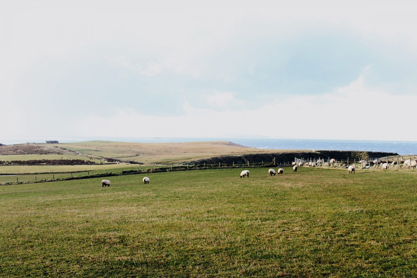 A green sheep pasture in Northern Ireland.
