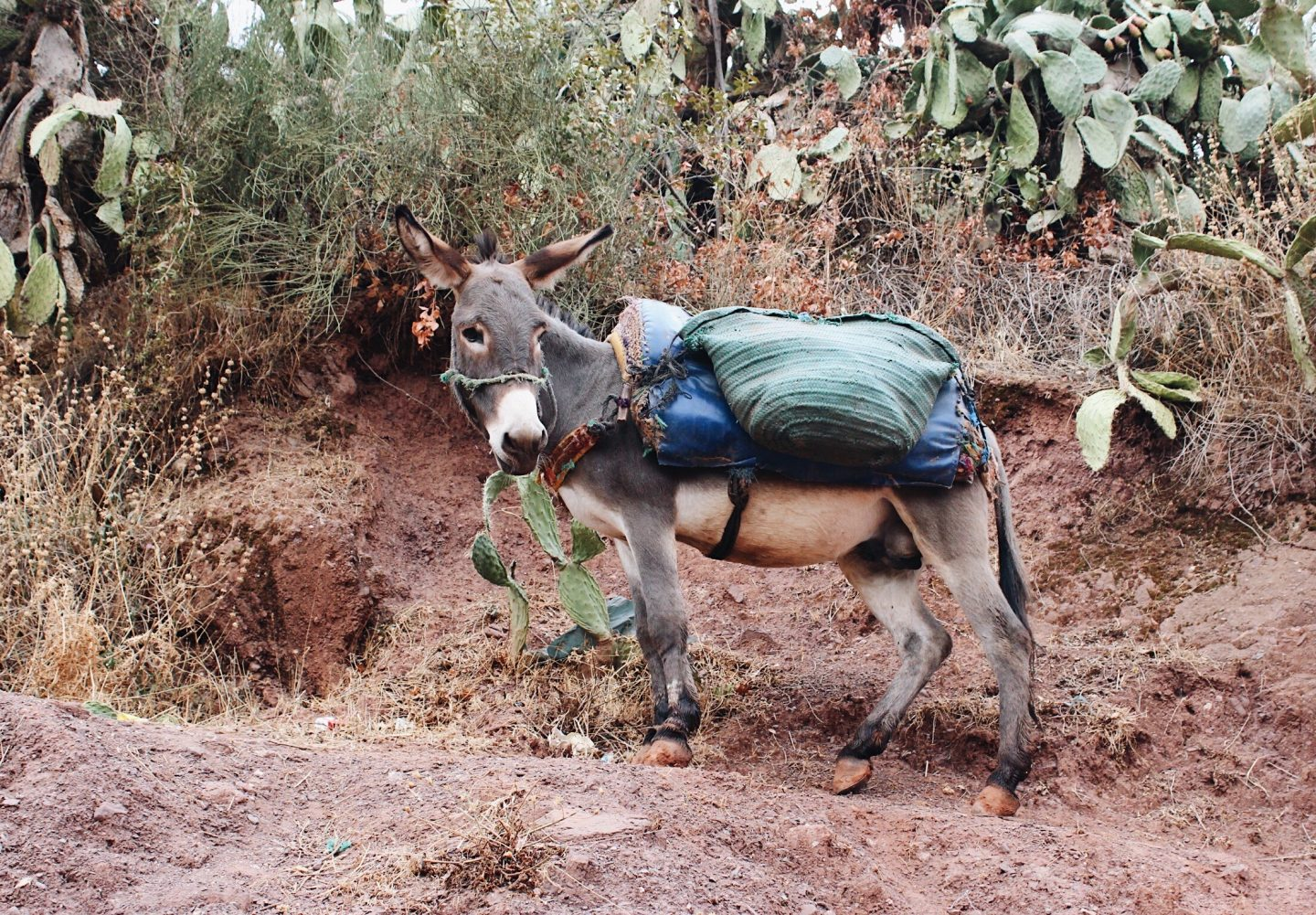 A local donkey in the Berber neighborhood!