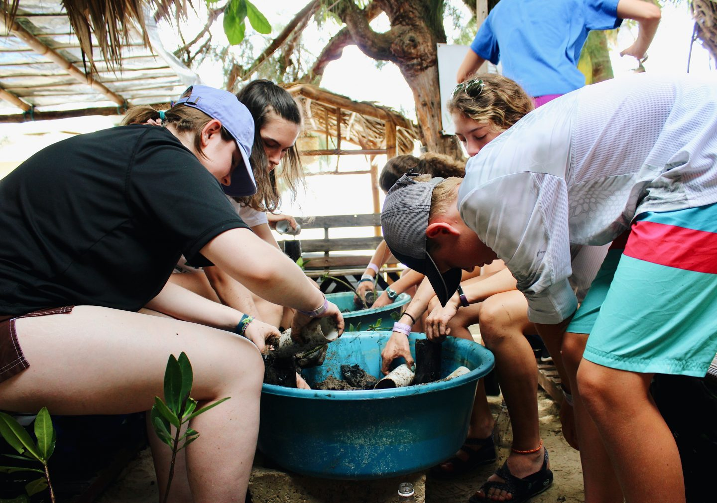 Replanting mangroves with EF students in the DR!