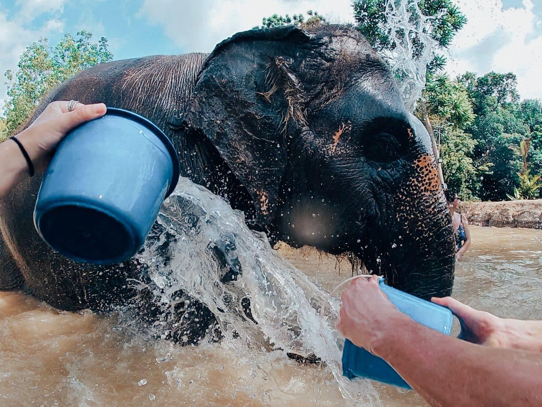 Giving an elephant a bath in Phuket, Thailand!