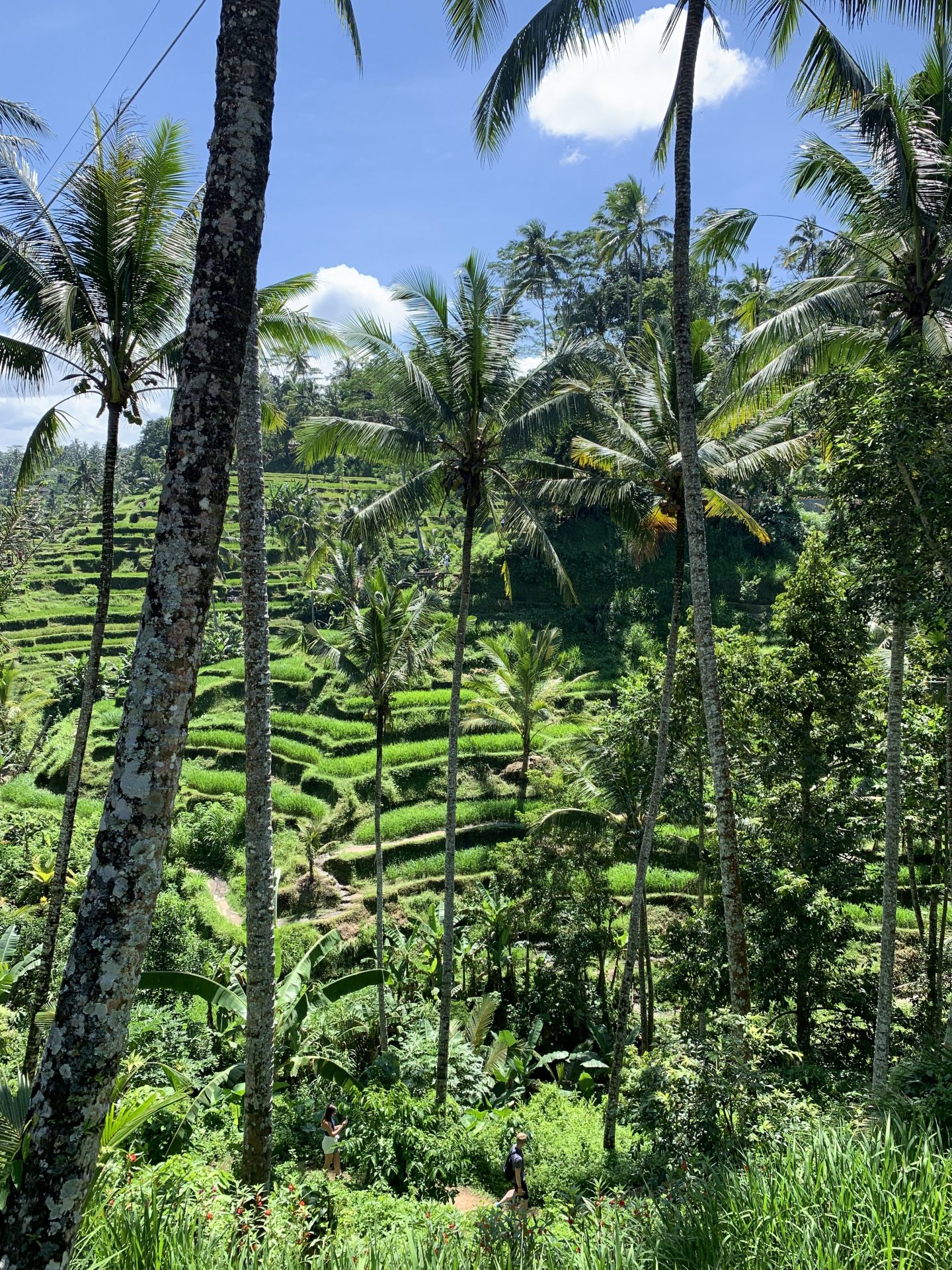 The Tegalalang terraces in Ubud, Bali!
