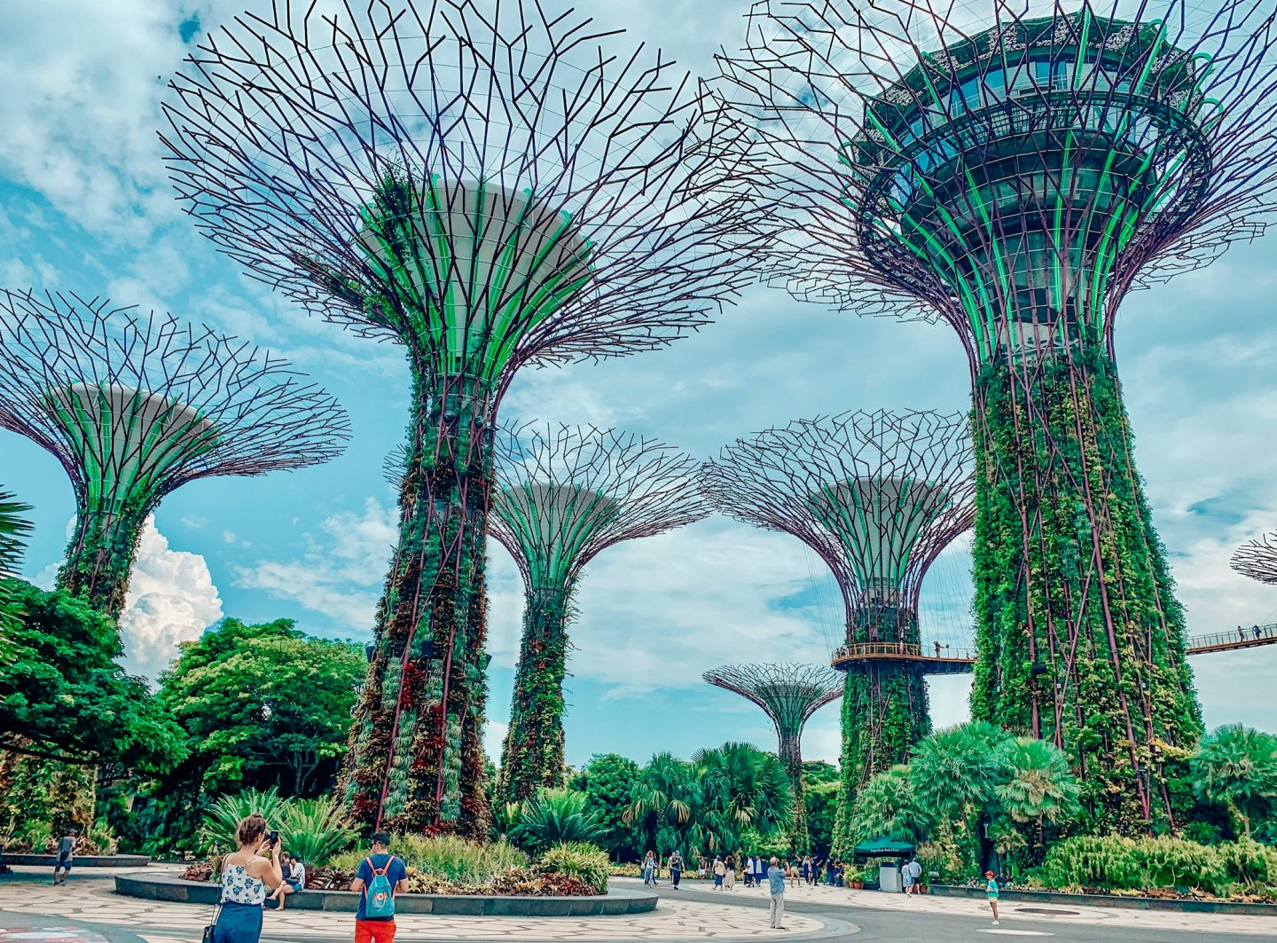 The Supertree Grove forest during the daytime in Singapore