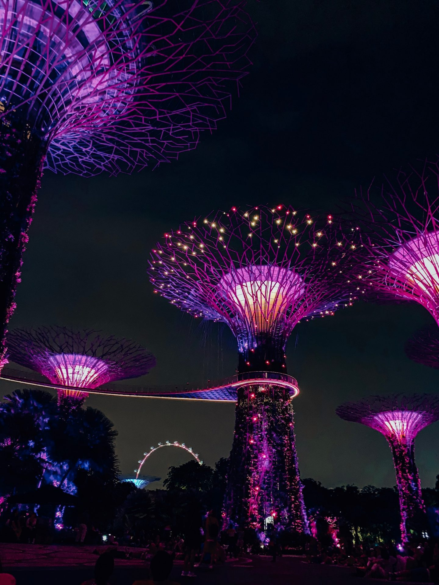 Supertree Grove evening light show in Singapore!