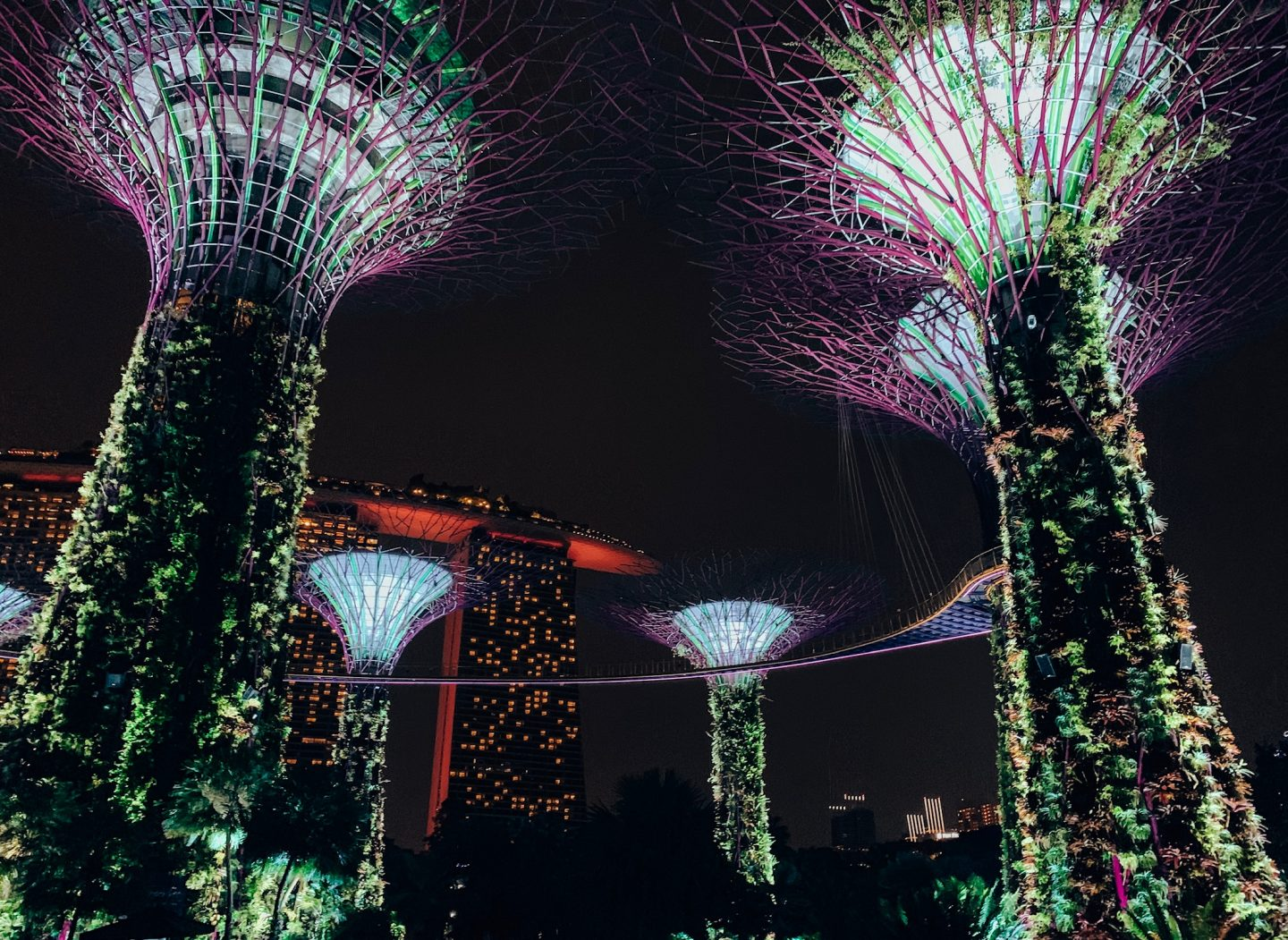The Supertree Grove forest during the night in Singapore