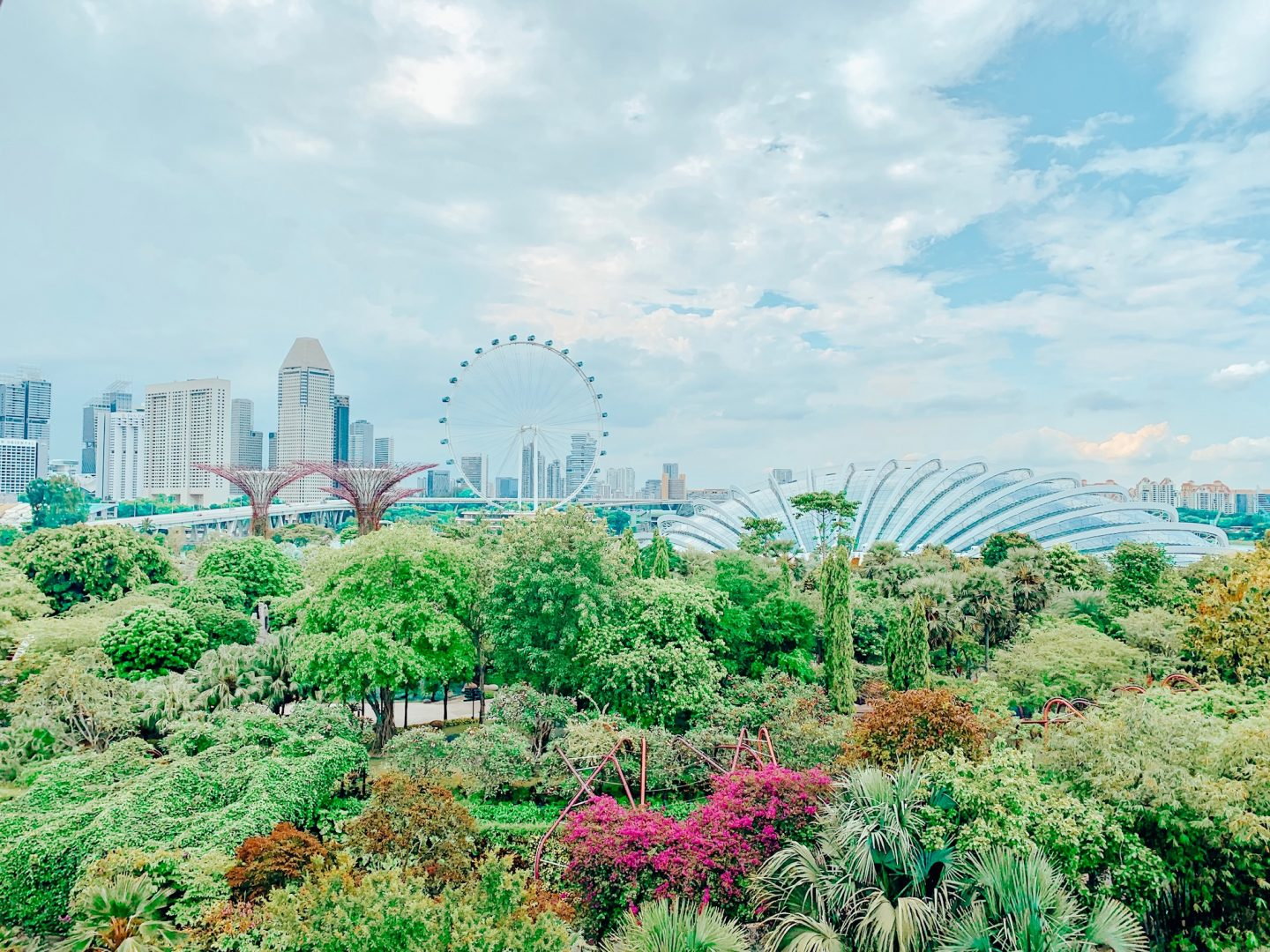 View from the Skywalk in the Supertree Grove in Singapore!