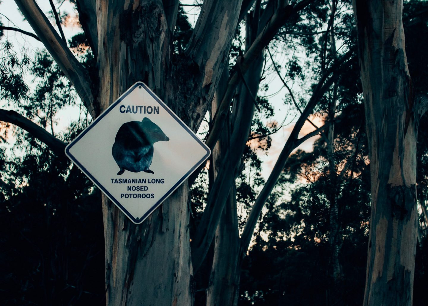 A photo of a Tasmanian Devil sign at our campsite.