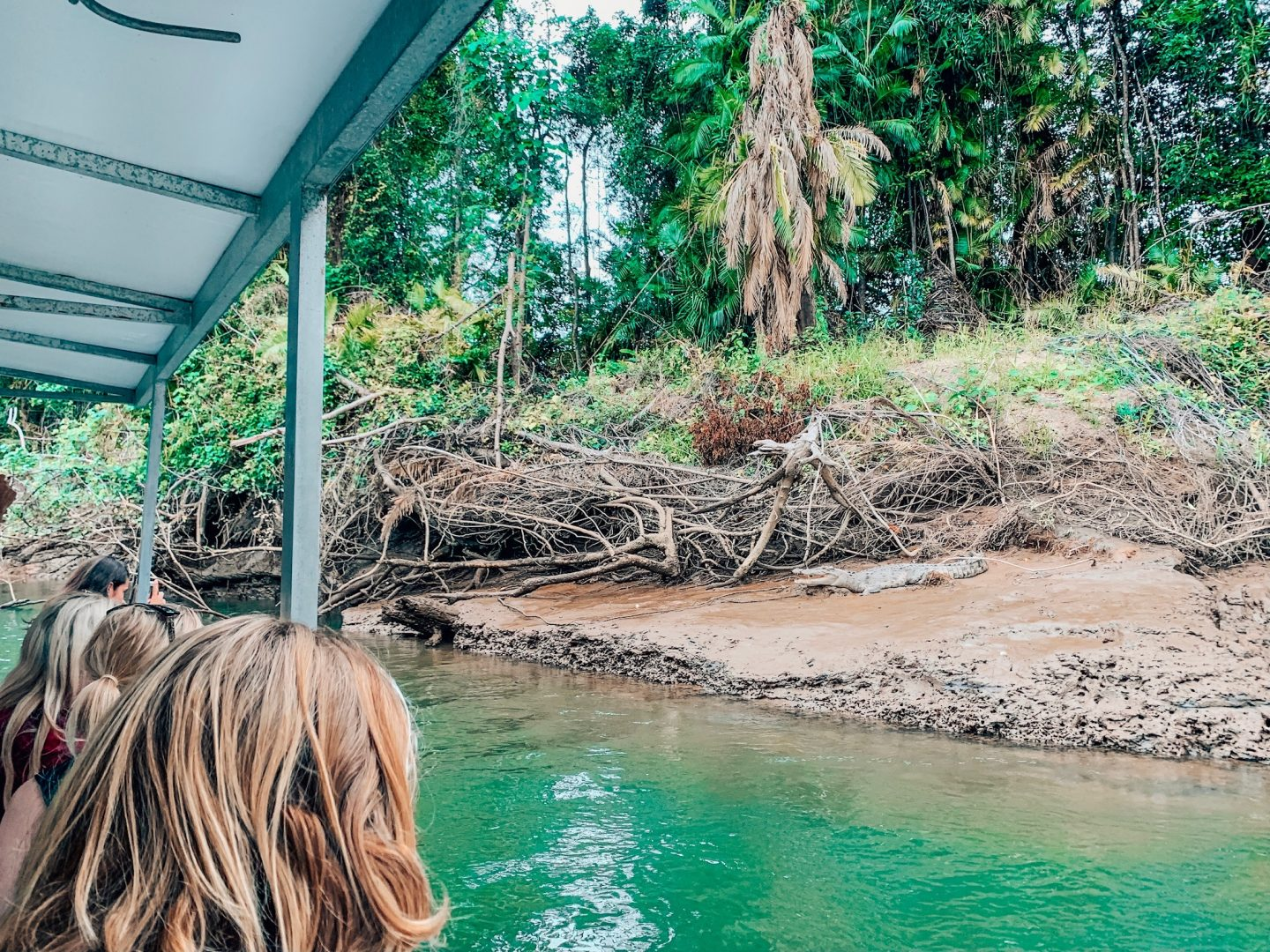 Looking for crocodiles on a Daintree River cruise