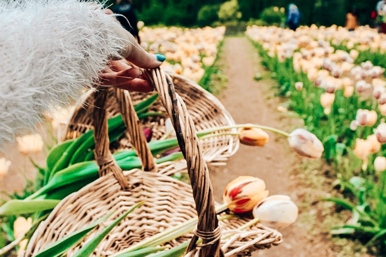 Wicked Tulips Flower Farm in Rhode Island